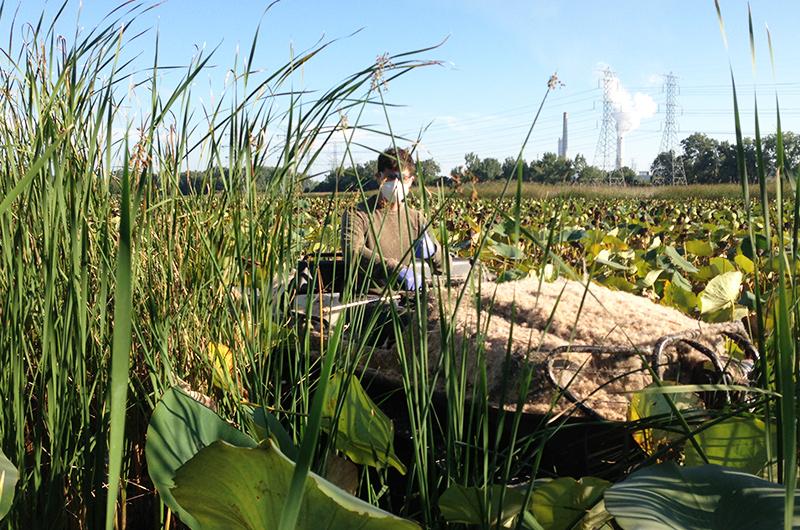 Wetland Banking